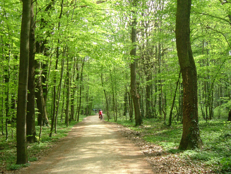 Voglesberger rad wanderwege